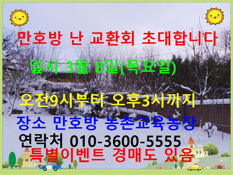 원판홍화(여추)20촉 꽃6경