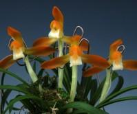 주금소심(동광)5촉 꽃 2경