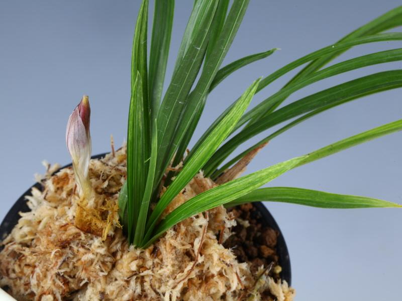 산채후첫꽃