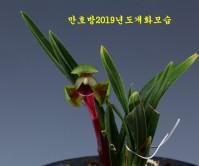 원홍설-완전전시작