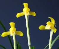 금난소-노랑병아리