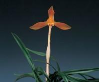 주금화(주대봉 )4촉 꽃 1경